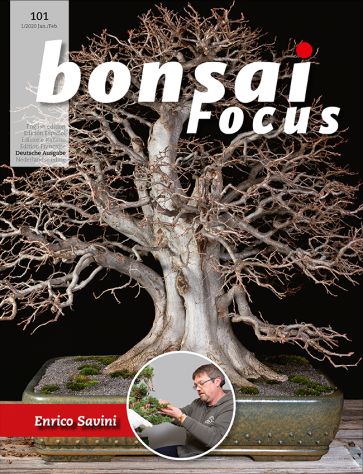 Bonsai Focus DE #101