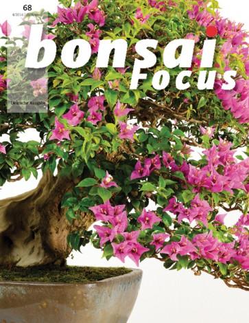 Bonsai Focus DE #68