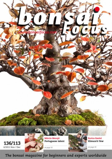 Bonsai Focus EN #113/#136