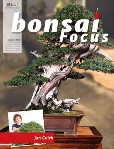 Bonsai Focus EN #151/#174