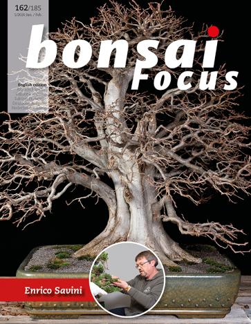 Bonsai Focus EN #162/#185
