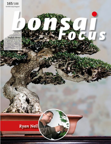Bonsai Focus EN #165/#188