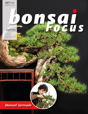 Bonsai Focus EN #167/#190