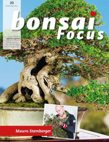 Bonsai Focus ES #20