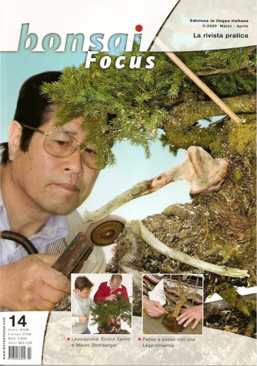 Bonsai Focus IT #14