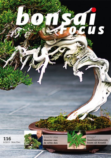 Bonsai Focus NL #116
