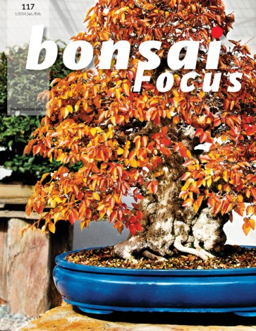 Bonsai Focus NL #117