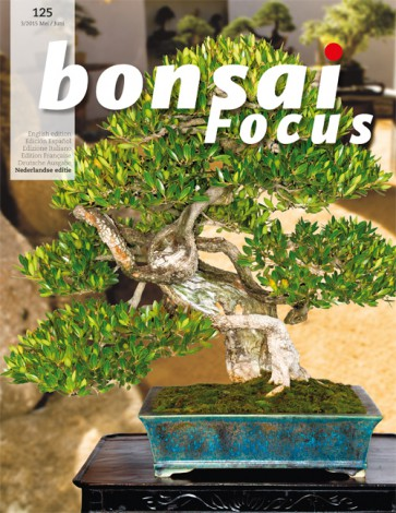 Bonsai Focus NL #125