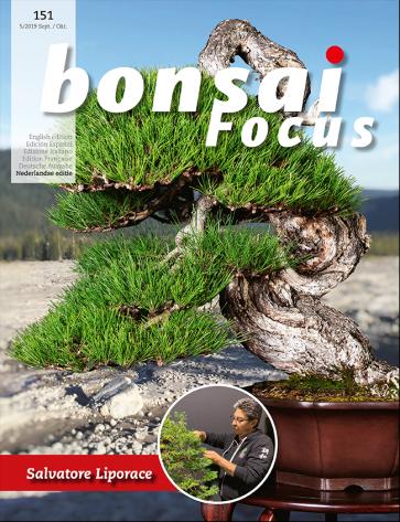 Bonsai Focus NL #151