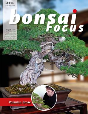 Bonsai Focus EN #164/#187