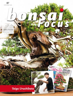 Bonsai Focus FR #87
