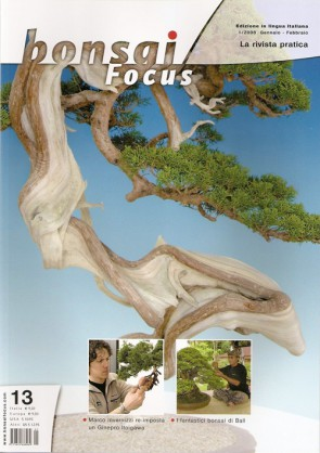 Bonsai Focus  IT #13