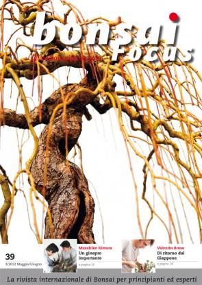 Bonsai Focus IT #39