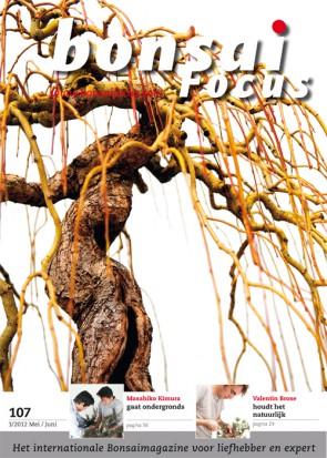 Bonsai Focus NL #107