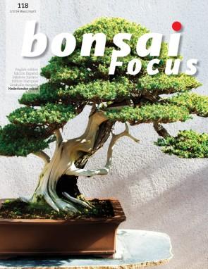Bonsai Focus NL #118