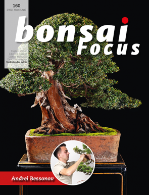 Bonsai Focus NL #160