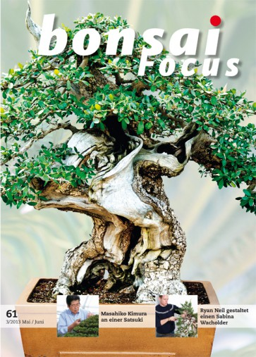 Bonsai Focus DE #61