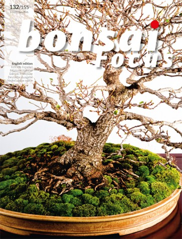 Bonsai Focus EN #132/#155