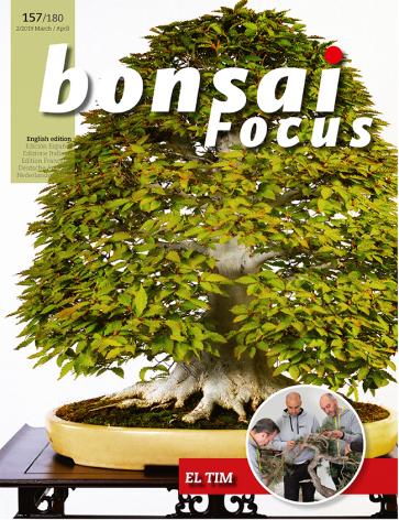 Bonsai Focus EN #157/#180