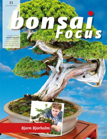 Bonsai Focus ES #21