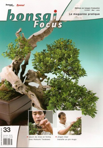 Bonsai Focus FR #33