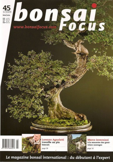 Bonsai Focus FR #45