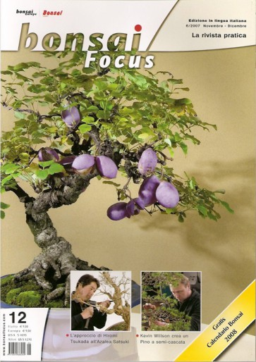 Bonsai Focus  IT #12