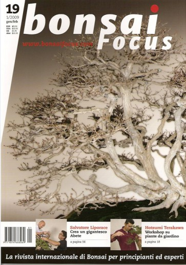 Bonsai Focus  IT #19