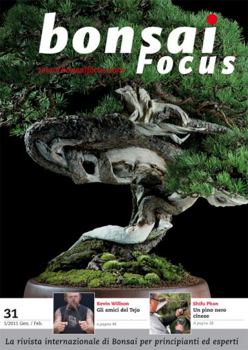 Bonsai Focus IT #31