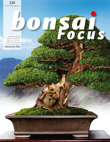 Bonsai Focus NL #126