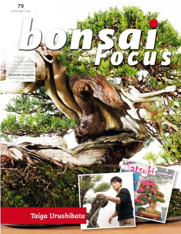 Bonsai Focus NL #131
