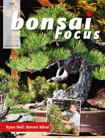 Bonsai Focus NL #132