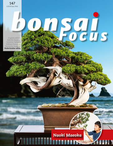 Bonsai Focus NL #147