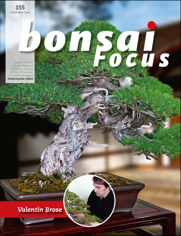 Bonsai Focus NL #155