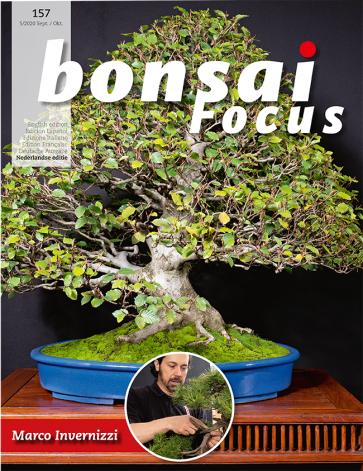 Bonsai Focus NL #157