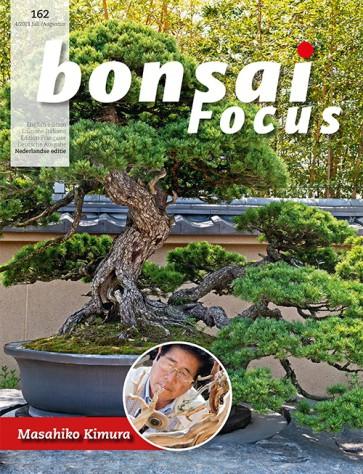 Bonsai Focus NL #162