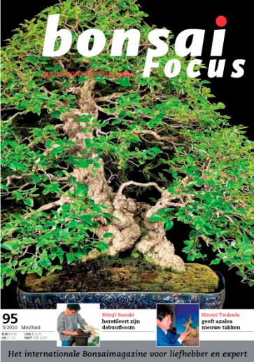 Bonsai Focus NL #95