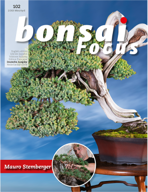 Bonsai Focus DE #102