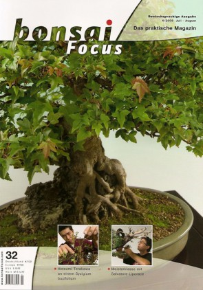 Bonsai Focus DE #32