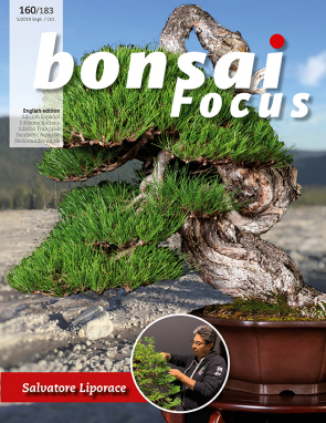 Bonsai Focus EN #160/#183