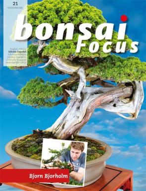 Bonsai Focus ES #21