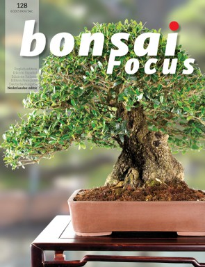 Bonsai Focus NL #128