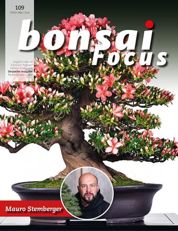 Bonsai Focus DE #109