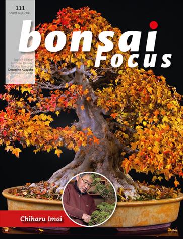 Bonsai Focus DE #111