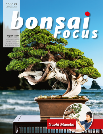 Bonsai Focus EN #156/#179