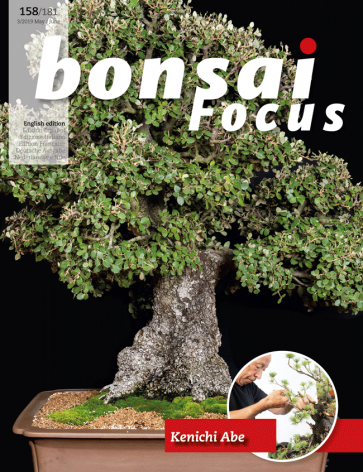 Bonsai Focus EN #158/#181