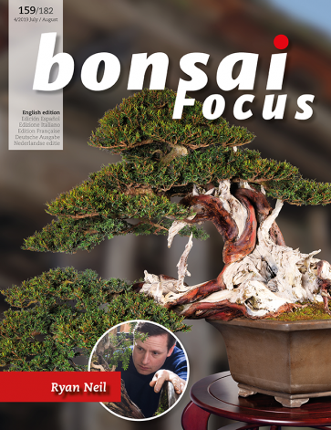 Bonsai Focus EN #159/#182