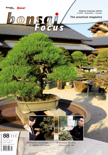 Bonsai Focus EN #88