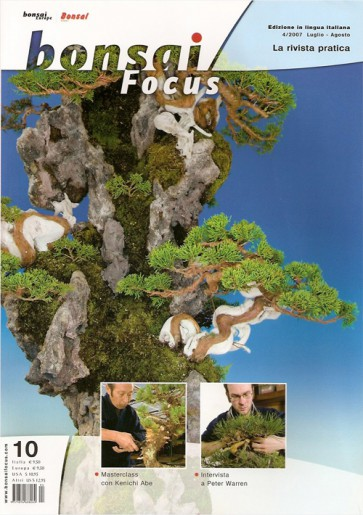 Bonsai Focus  IT #10