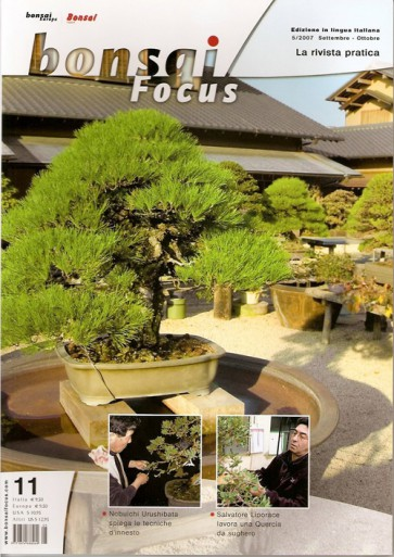 Bonsai Focus  IT #11